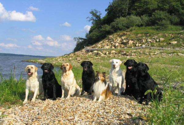 About Shadowmyst Labradors